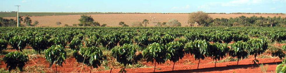 コーヒー豆 栽培農園
