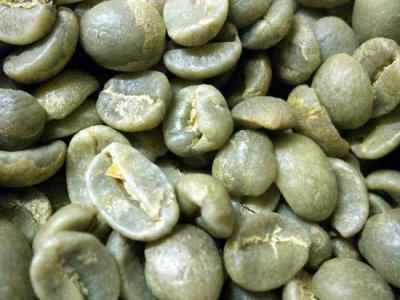 画像1: コーヒー生豆【10kg】キリマンジャロ/タンザニアFAQ AA