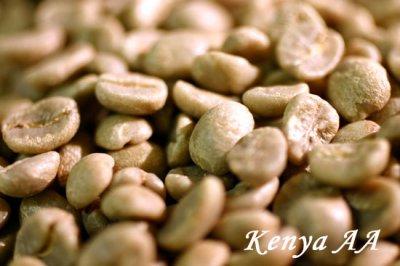 画像2: コーヒー生豆 キリマンジャロ ケニアAA【10kg】