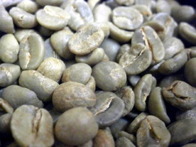 画像1: コーヒー生豆【1kg】キリマンジャロ/タンザニアFAQ AA【1kg】