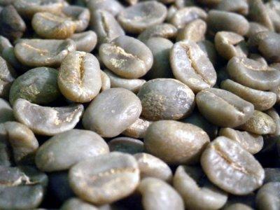 画像1: コーヒー生豆 コスタリカコーラルマウンテン 10kg