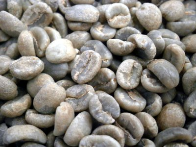 画像3: コーヒー生豆 キリマンジャロ ケニアAA【10kg】
