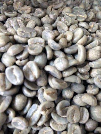 画像1: コーヒー生豆 グァテマラSHBアカテナンゴ 1kg
