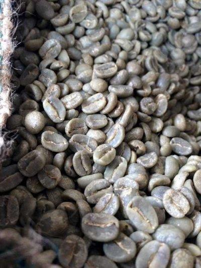 画像2: コーヒー生豆 グァテマラSHBアカテナンゴ 1kg