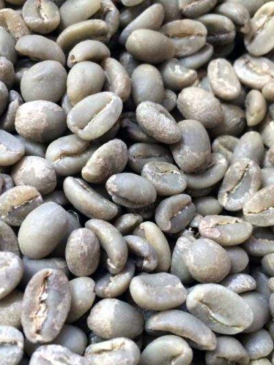 画像2: コーヒー生豆 モカ シダモG2【10kg】