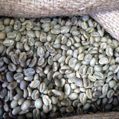 画像1: コーヒー生豆【100g】イルガチャフェG2/エチオピア モカコーヒー