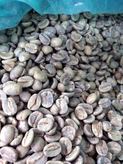 画像1: コーヒー生豆【100g】ブラジル モンテアレグレ農園
