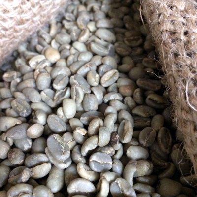 画像3: コーヒー生豆【100g】イルガチャフェG2/エチオピア モカコーヒー
