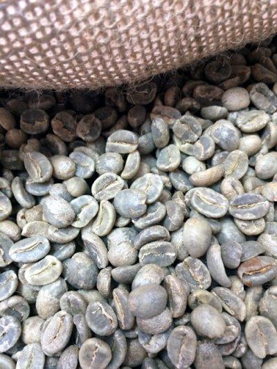 画像1: コーヒー生豆 グァテマラSHBアカティナンゴ 1kg/テフヤ農園