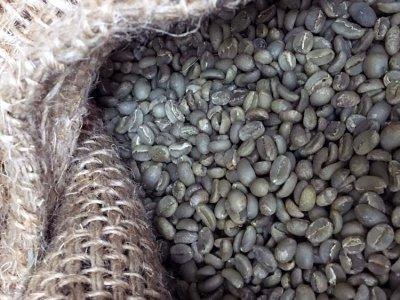 画像2: コーヒー生豆【100g】イルガチャフェG2/エチオピア モカコーヒー