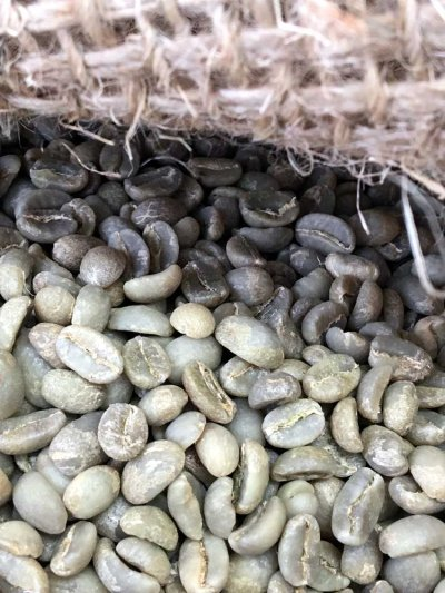 画像1: コーヒー生豆【正袋60kg】イルガチャフェG2