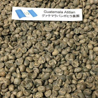 画像2: コーヒー生豆【1kg】グァテマラアティトゥラン/パンポヒラ農園