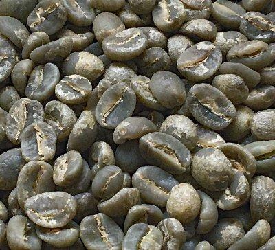 画像1: コーヒー生豆【1kg】グァテマラアティトゥラン/パンポヒラ農園