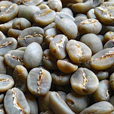 画像1: コーヒー生豆【10kg】トラジャ