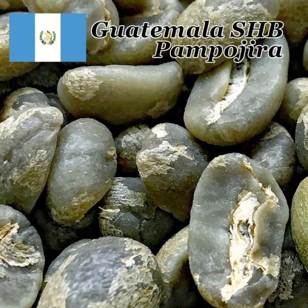 画像1: コーヒー生豆【1kg】グァテマラアティトゥラン/パンポヒラ農園 (1)